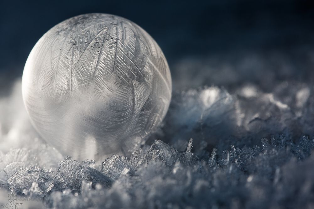 Frozen Bubble by Victoria Hillman