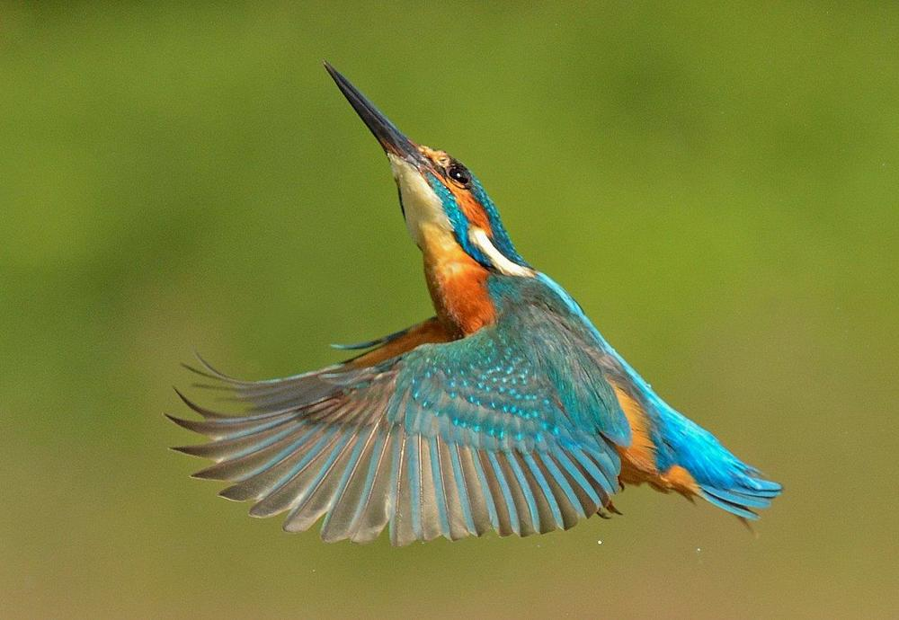 Up and Away by Keith Bannister